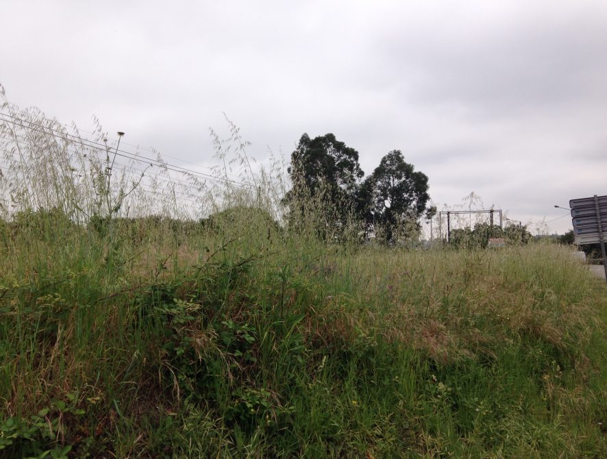 lote_20000m2